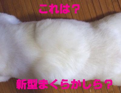 2009_0802220010.jpg