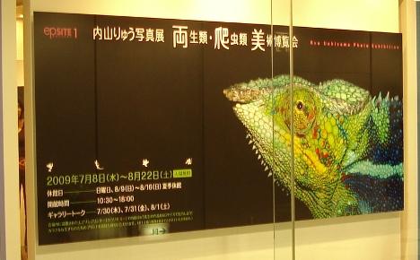 「両生類・爬虫類 美術博覧会」