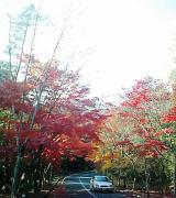 エントランスロードの紅葉