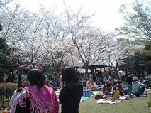 桜も満開よ