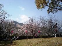 ありがとうお城の桜