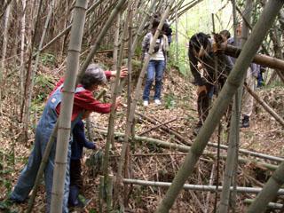 竹の伐採05