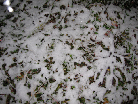 09.11.02初雪