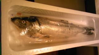 2008鮭
