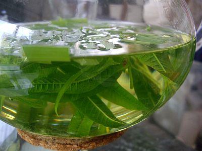 lemonglass3.jpg
