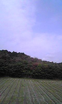 Image694.jpg