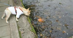 鯉さんだ!