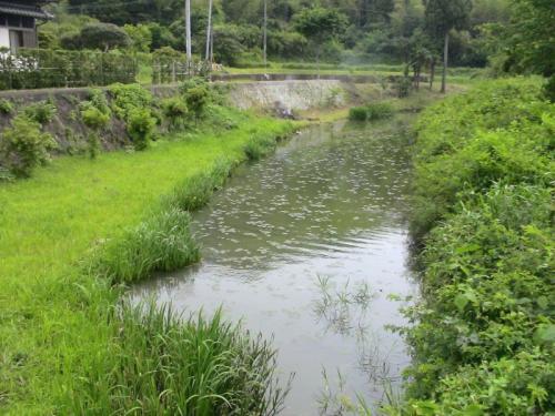 阿南市長生町段、桑野川の流れが分岐している地点