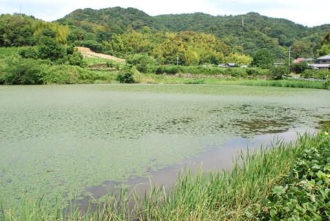 徳島市入野溜池