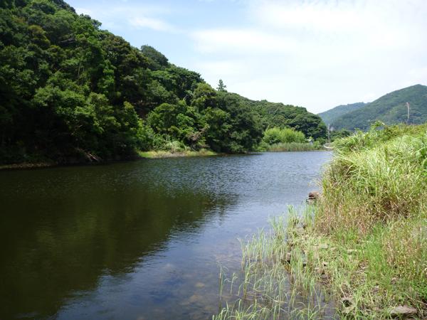 ベニトンボ生息環境