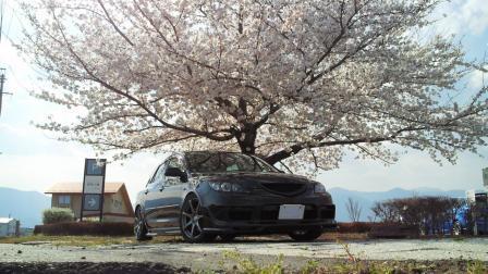 桜とふじさん号2