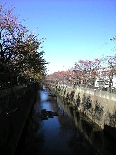 2008/11/20