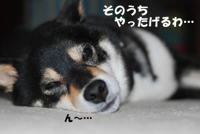 20080603_0022.jpg