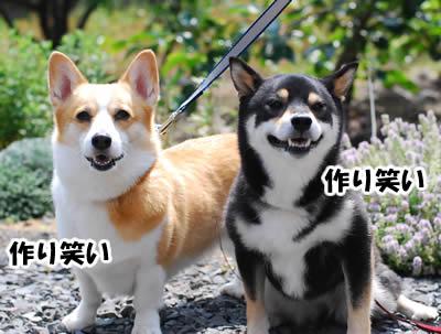 20080620_0061.jpg