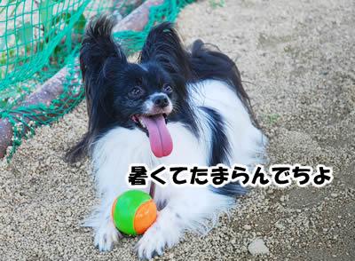 20080630_0101.jpg