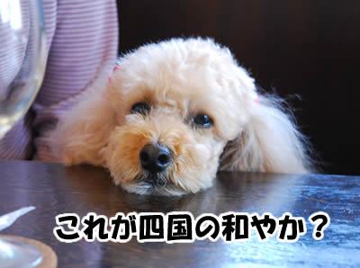 20081101_11.jpg