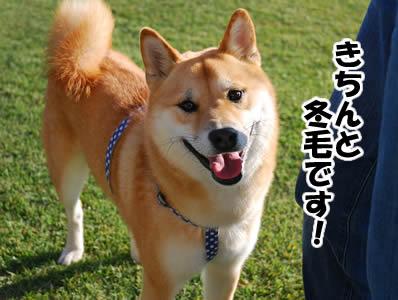20081101_5.jpg