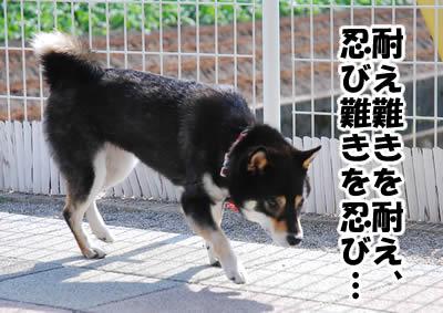20081104_1.jpg