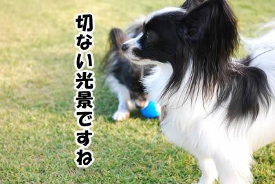 20081104_10.jpg