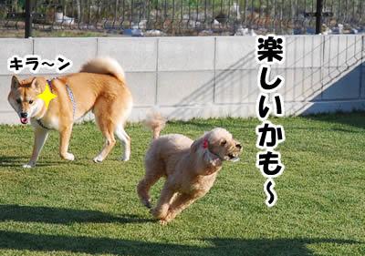 20081104_5.jpg