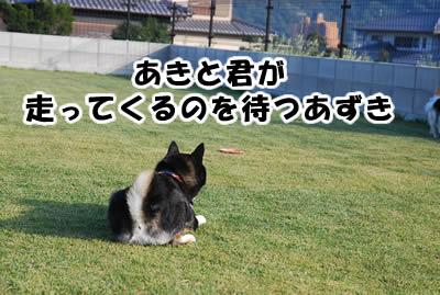 20081104_9.jpg