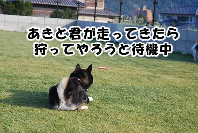 20081104_8.jpg