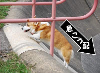 20081109_12.jpg