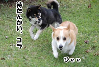 20081109_3.jpg