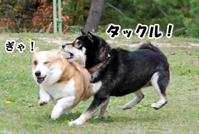 20081109_4.jpg