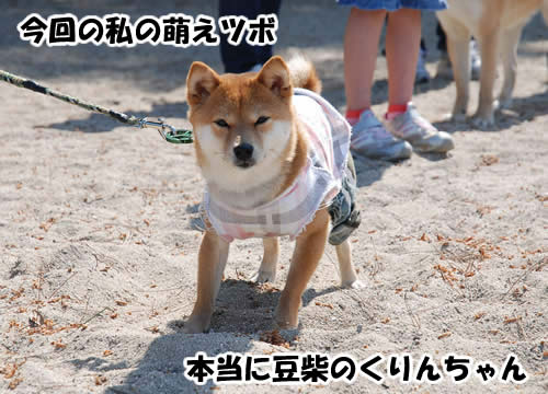 くりんちゃん