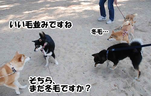 語らう犬たち