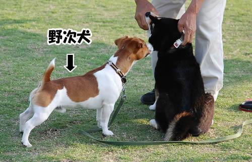 ちょっと野次犬