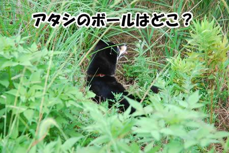 ジャングルか?