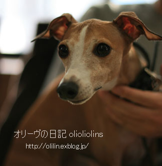 http://olilin.exblog.jp/