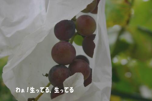 090830_4.jpg