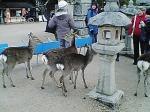 外国人グループを襲う野良鹿