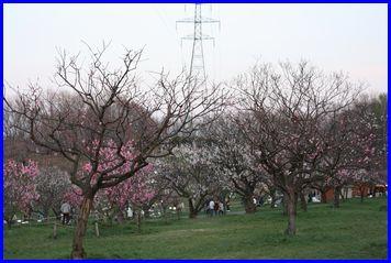Hiraoka-2009-5-5-1.jpg