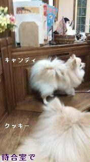 20080330172004.jpg