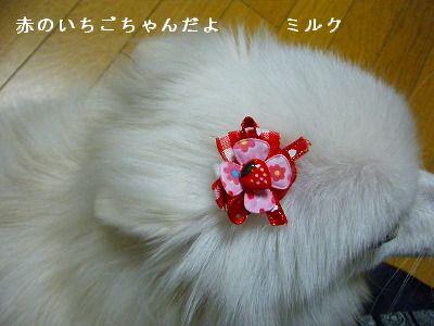 s-2009_1022MOMO運動会0007