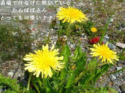 s-2009_04074pome0003.jpg