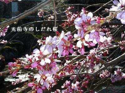 s-2009_04104pome0042.jpg