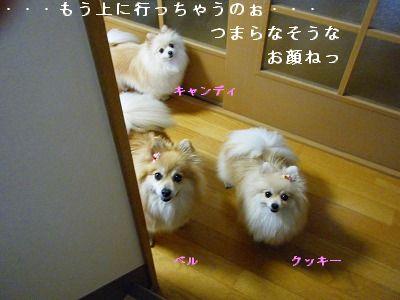 s-2009_04114pome0004.jpg