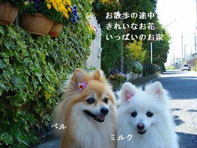 s-2009_04124pome0003.jpg