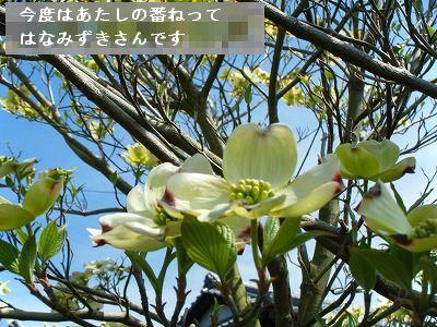 s-2009_04124pome0005.jpg