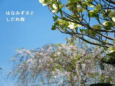 s-2009_04124pome0006.jpg