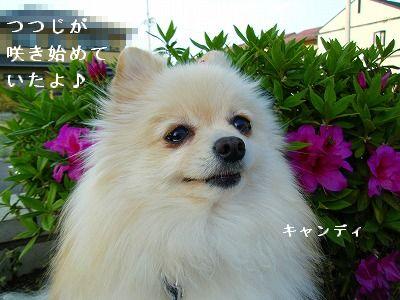 s-2009_04134pome0001.jpg