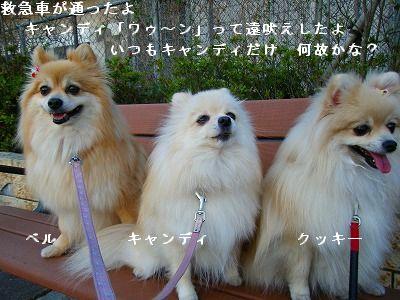 s-2009_04134pome0003.jpg