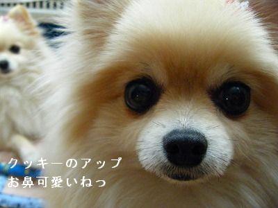 s-2009_04164pome0001.jpg