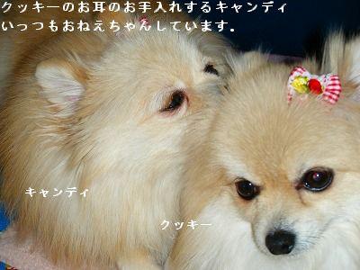 s-2009_04164pome0005.jpg