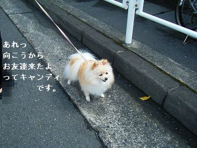 s-2009_04164pome0014.jpg